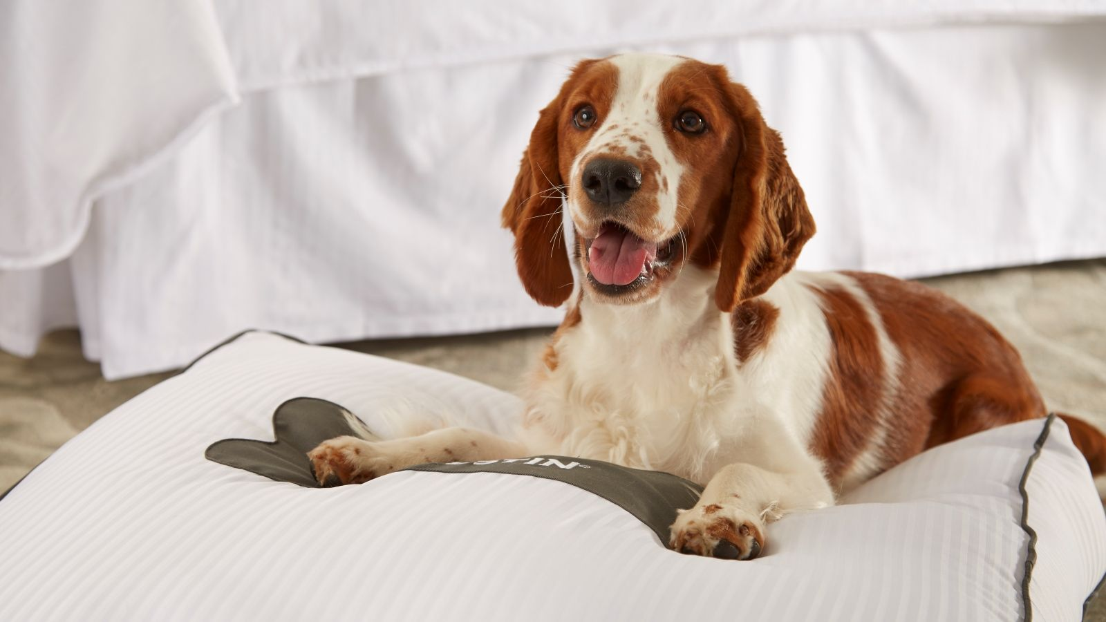 SFO Hotel Features - Pet Friendly Hotel